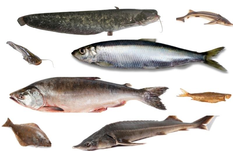 Виды рыб для запекания в фольге или на решетке