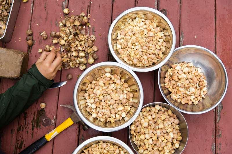 Желуди можно использовать в пищу, однако они должны быть правильно приготовленными