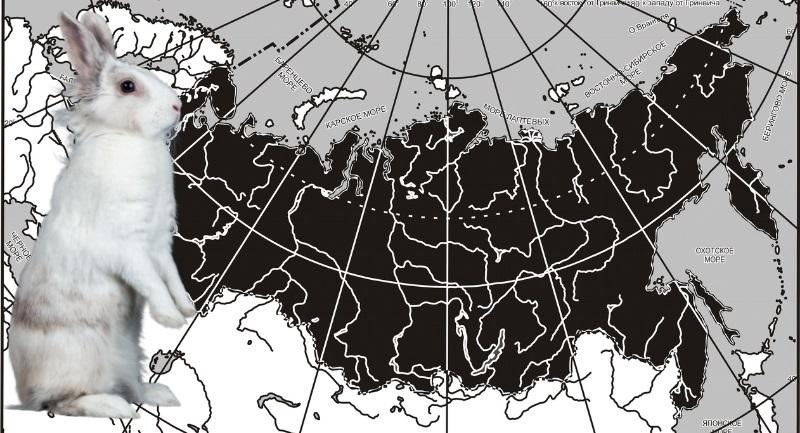 Заяц беляк обитает на всей территории России - от тундры до лесостепной зоны
