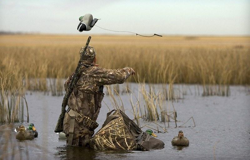 Охота на селезня с подсадной уткой - самая захватывающая и азартная