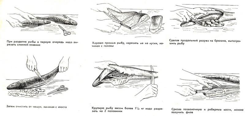 Схема разделки рыбы для приготовления на мангале