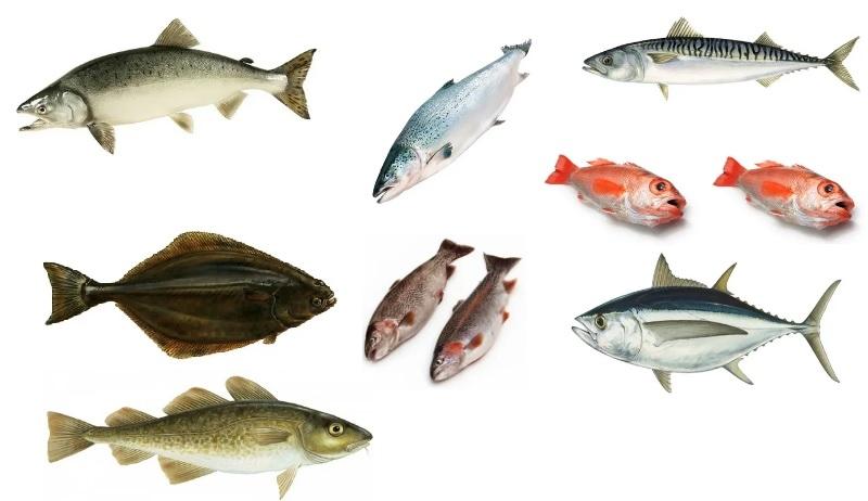 Сорта рыбы для жарки на мангале
